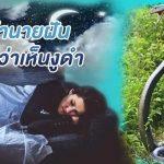 ทำนายฝัน : ฝันเห็นงูสีดำ ช่วงเดือน กันยายน 2564
